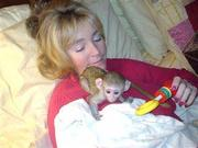 GFHDF Adorable Twin Pygmy Marmoset and Capuchin 07031957695