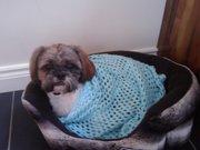 Gorgeous Shih Tzu dog for sale